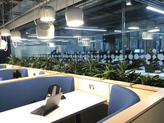 In Brief: Create an astounding plant scheme to enhance the environment of Inform PLC London