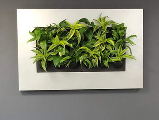 Acre Showcasing Living Frames and Moss Panels