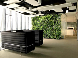 Large Living Wall