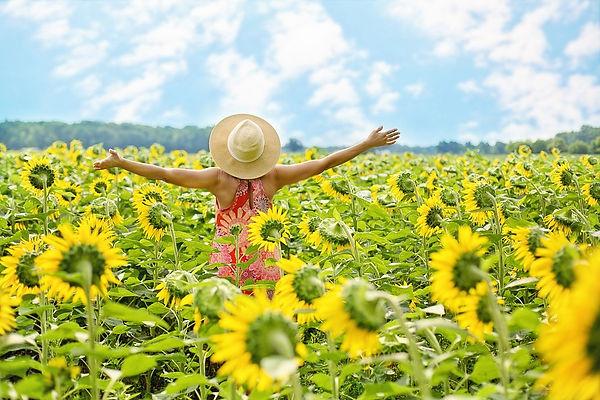 sunflowers-3640938_960_720.jpg