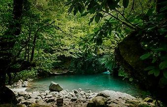 Mtirala National park.jpg