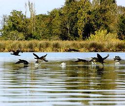 Kolkheti National park.jpg
