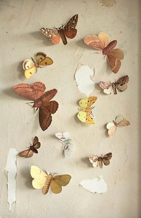 Moth%20Eaten_edited.jpg