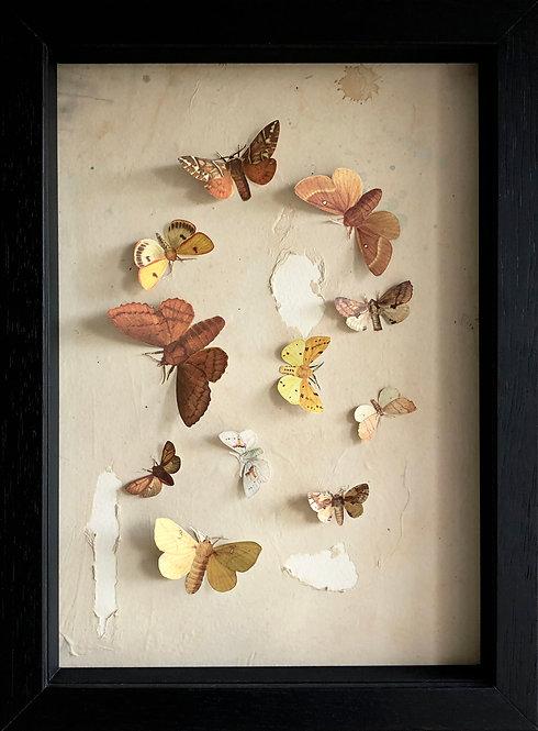 Moth Eaten