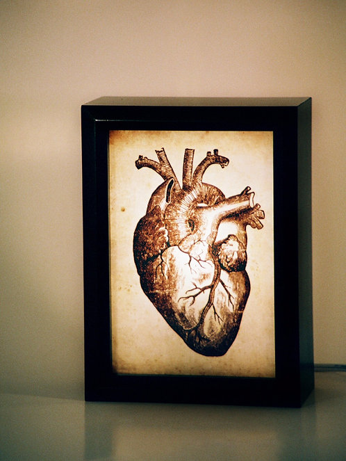Anatomical Heart lightbox