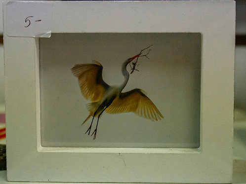 Crane with a Branch Picture