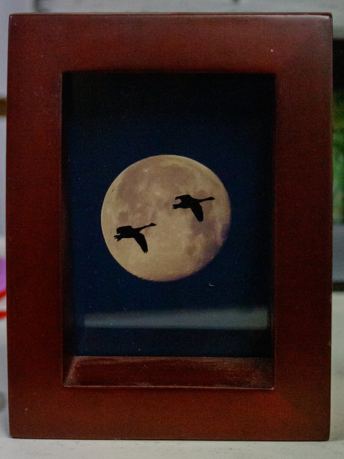 Bird Moon Silhouette Picture