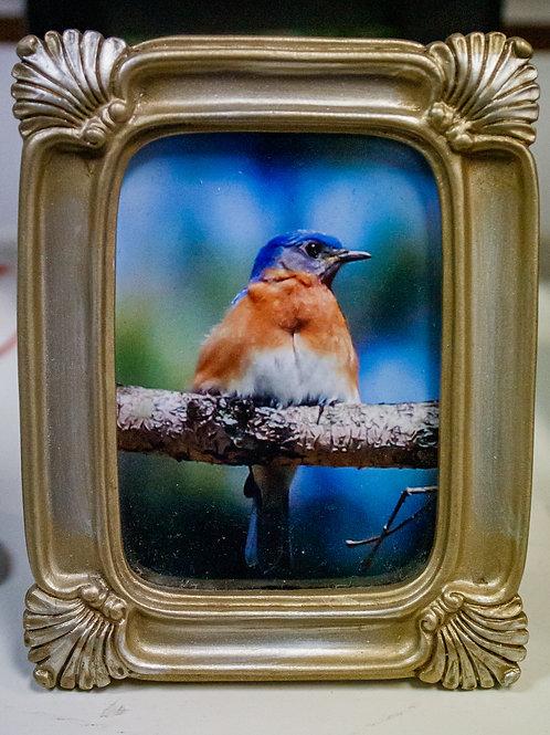 Blue & Orange Bird Picture