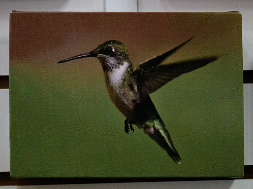 Flying Hummingbird Canvas