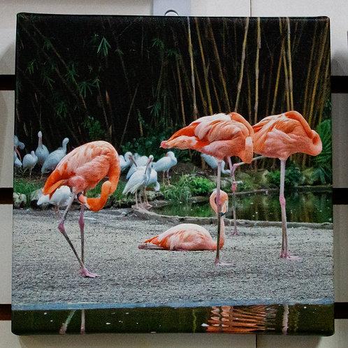 Flamingos Canvas