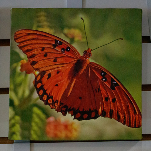 Red Butterfly Canvas