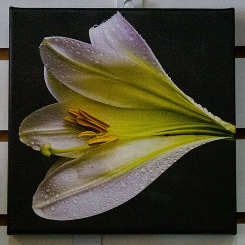 Yellow Flower Cavas