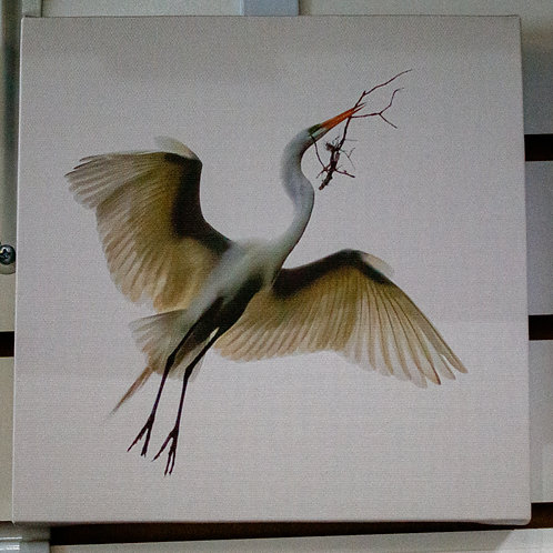 Crane with Branch Canvas