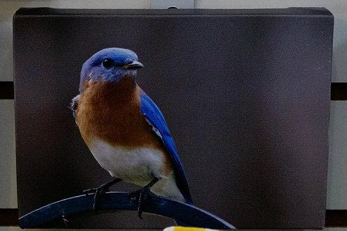 Bird on a Branch Canvas