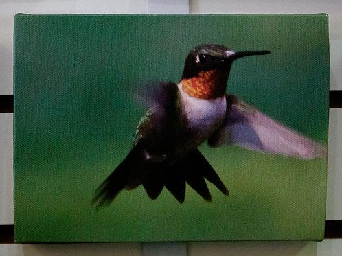 Red Hummingbird Canvas