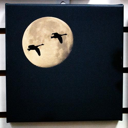 Bird Moon Silhouette Canvas