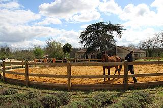 coaching met paarden in Frankrijk