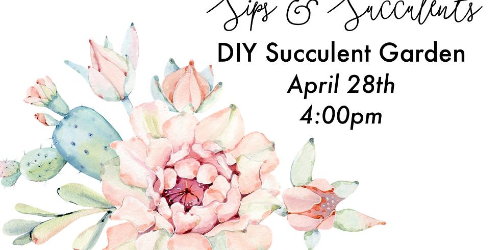 Sips & Succulents - Succulent Gardens