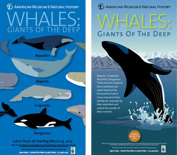 AMNH-Whales-grouped.jpg