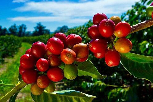 100% Kona Coffee 1 pound