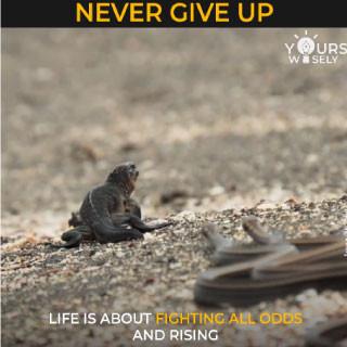 Iguana Video (Never Give Up)