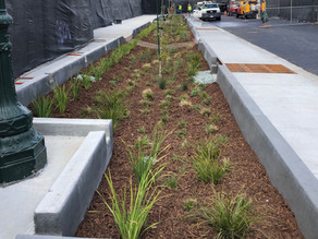 San Pablo Avenue Green Stormwater Spine