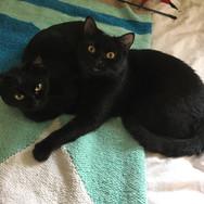 Serena & Dottie