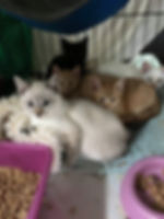 kittens3.jpg
