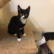 Jerry - Adopted