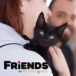 Friends_Program_1080x1080_Kitten_JPG.jpg