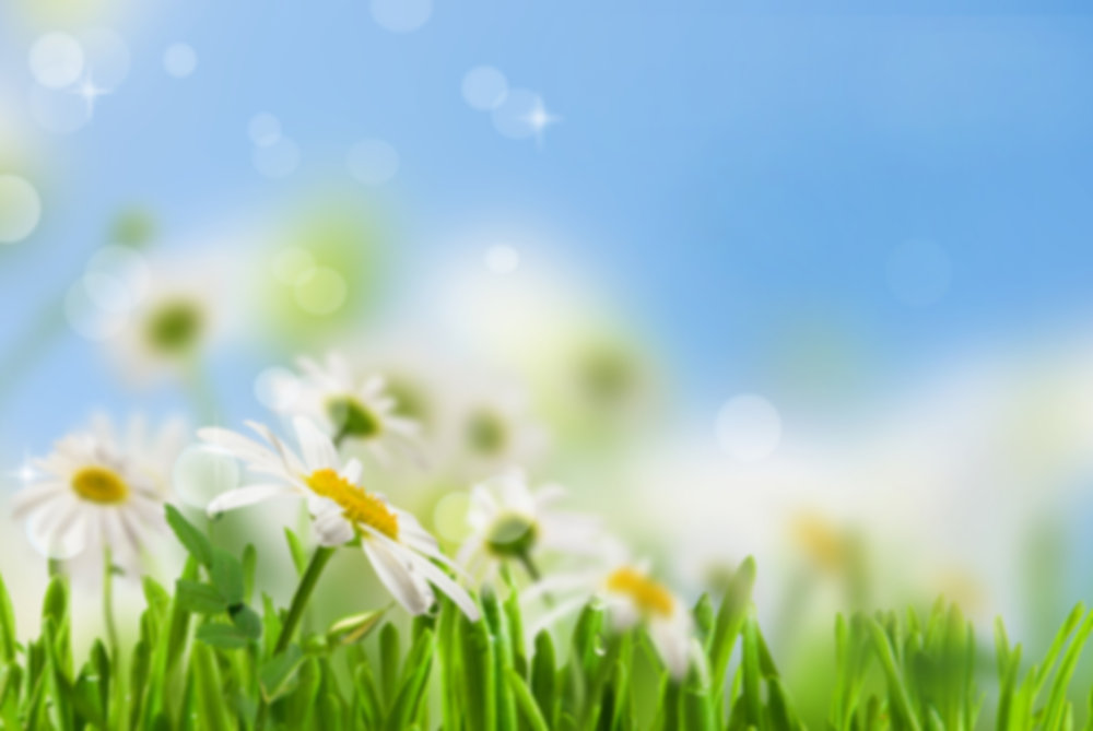 spring-is-here.jpg