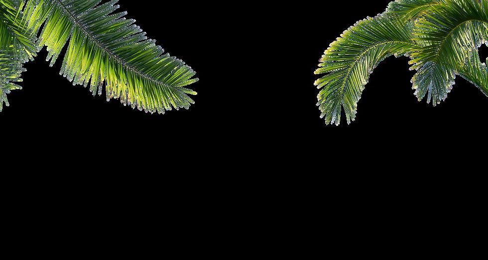 Palmen von Oben72dpi.png