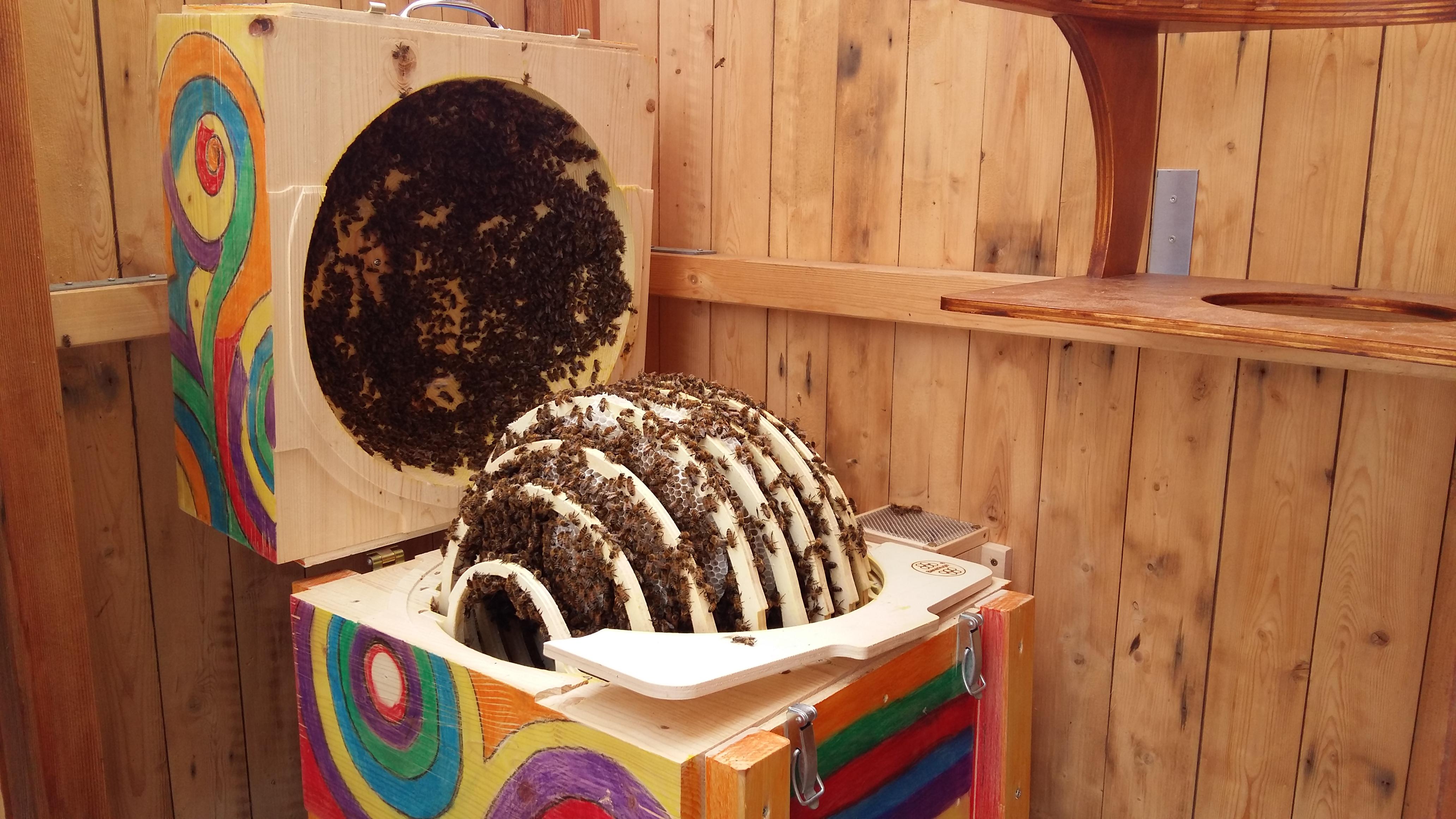 D6 Sommer Blick in die Bienenkugel eine