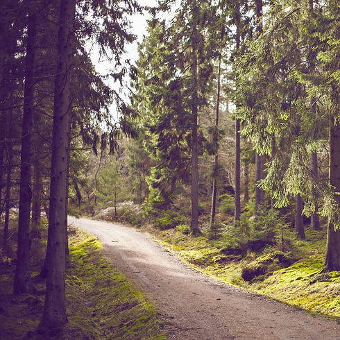 Woodland Path_edited.jpg