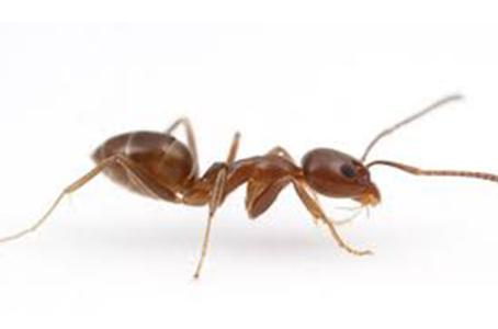 Conhecendo as Formigas