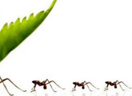 Formigas em Mudança