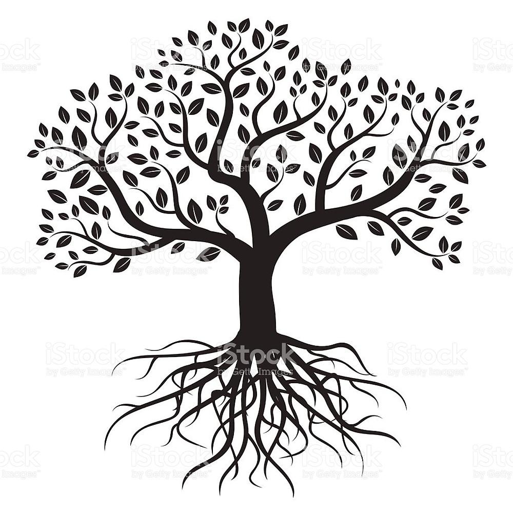 Árvores e sua raiz