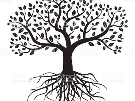 Aprendendo com a Árvore