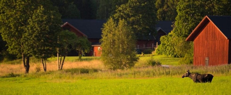 tarandro-wild-sweden-copyright.jpg