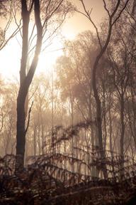 sunrise trees 1 (1 of 1).jpg