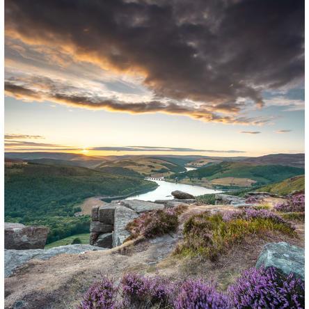 Bamford in purple