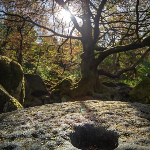 padley tree and moll 1.jpg