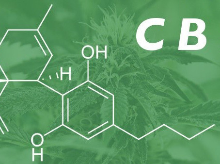 מה זה CBD?