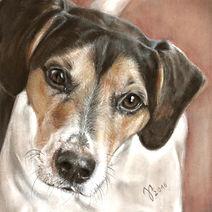 Tierportraits, Hundezeichung, Hundeportrait,