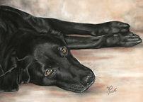 Hundezeichnung, Hundeportrait in Pastellkreide von Jutta Pallasch - Pastellblicke Tierportraits