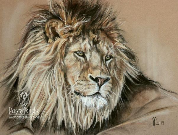 Löwe in Pastellkreide, Löwenzeichnung. Wildlife Zeichnung. Drawing lion