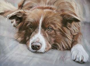Hundezeichnung, Hundeportrait, Pastellkreide, Jutta Pallasch - Pastellbllicke Tierportraits