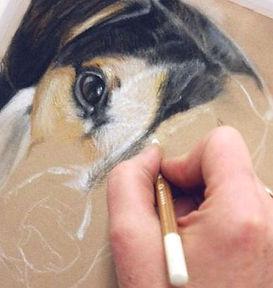 Tierportrait, Hundeportrait, Tierzeihnung, Entstehung einer Zeichnung, Tierportrait in Arbeit