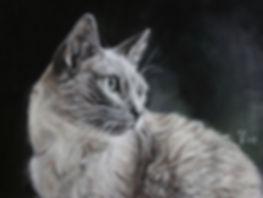 Katzenzeichnung in Pastellkreide von Jutta Pallasch - Pastellblicke Tierportraits