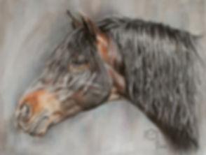Andalusier, PRE Hengst gezeichnet von Pastellblicke Tierportraits Jutta Pallasch - Pferdezeichnung in Pastellkreide